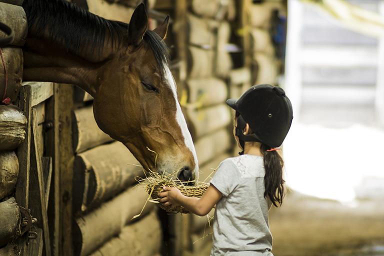 Pferdestall-Lasur